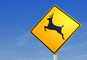 Avoiding Collisions with Deer